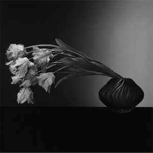 Tulips+mapplethorpe