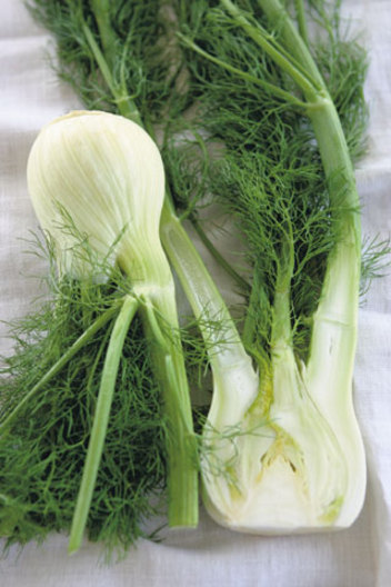 أنواع أعشاب مفيده للشعر (بالصووووووووووووووور)